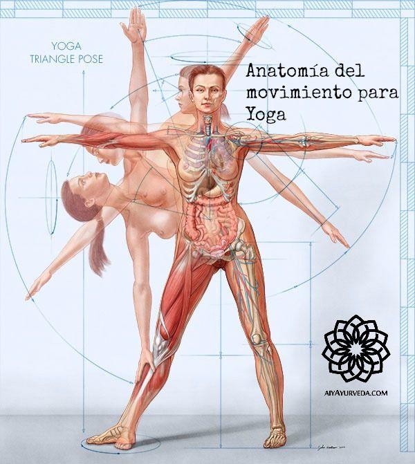 Anatomía del movimiento en el Yoga - Instituto Yoga y Ayurveda